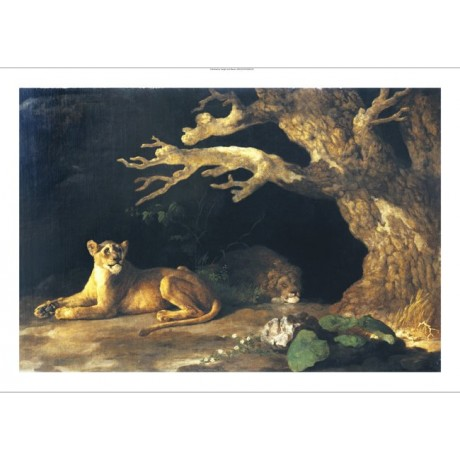 """GEORGE STUBBS """"Lioness And Lion In A Cave"""" new CANVAS! various SIZES, BRAND NEW"""