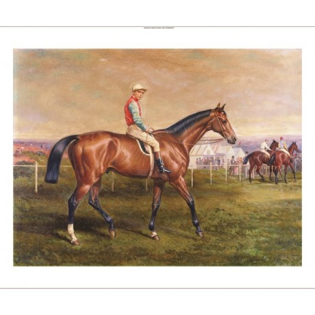 "EDMUND HAVELL ""Suspender A Bay Race Horse"" CANVAS PRINT various SIZES, BRAND NEW"