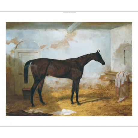 "HARRY HALL ""Mr. A.W. Hill's Bay Colt Sweetmeat"" CANVAS! various SIZES, BRAND NEW"