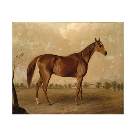 "EDWARD TROYE ""Asteroid At Stud"" BROWSE our eBay shop! various SIZES, BRAND NEW"