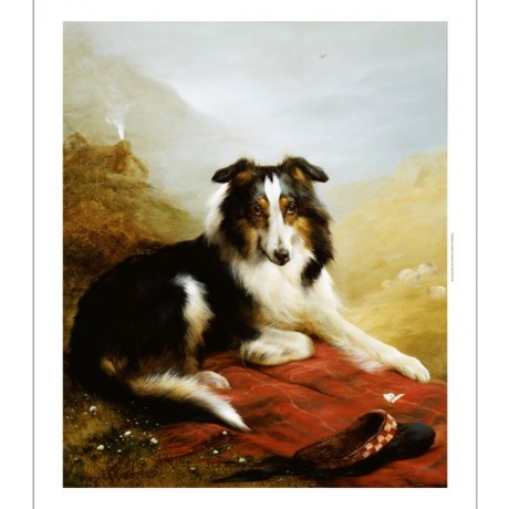 EDWIN DOUGLAS Collie Guardian Dog print ON CANVAS choose SIZE, from 55cm up, NEW