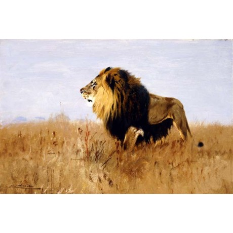 "WILHELM KUHNERT ""Lion Watching for Prey"" PROWLING grassland safari CANVAS PRINT"