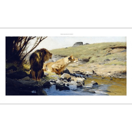 WILHELM KUHNERT A Lion and Lioness at a Stream WILD landscape NEW CANVAS PRINT