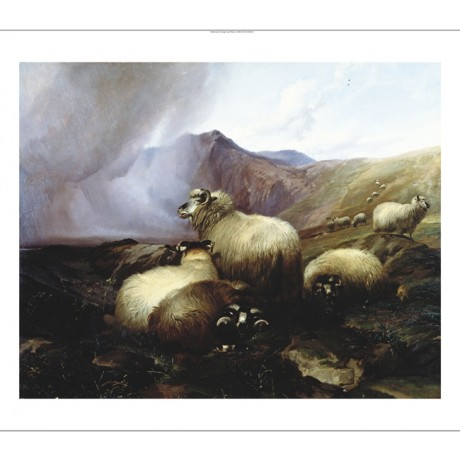 "THOMAS SIDNEY COOPER ""Highland Sheep"" BROWSE our shop! various SIZES, BRAND NEW"