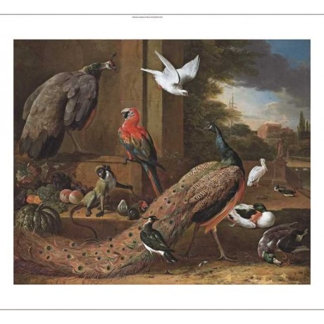"MELCHOIR D'HONDECOETER ""A peacock, a peahen, a monkey"" TERRACE birds NEW CANVAS"