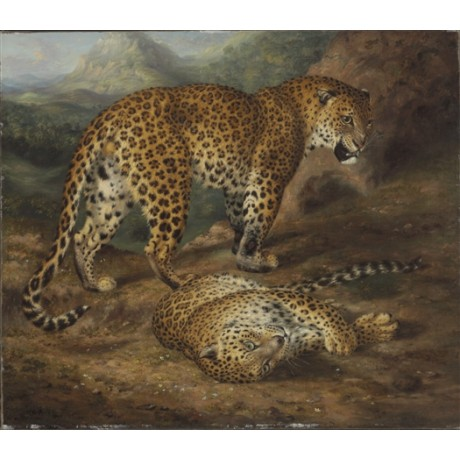 "WILLIAM HUGGINS ""Two Leopards"" ENDANGERED cats spots fur mountain CANVAS PRINT"