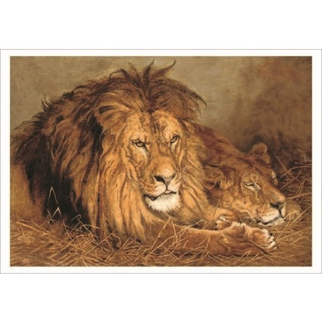 "GEZA VASTAGH ""A Lion and a Lioness"" africa on CANVAS various SIZES available"