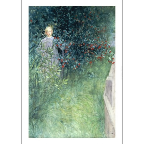 "CARL LARSSON ""In Hawthorn Hedge"" ON CANVAS young girl various SIZES, BRAND NEW"