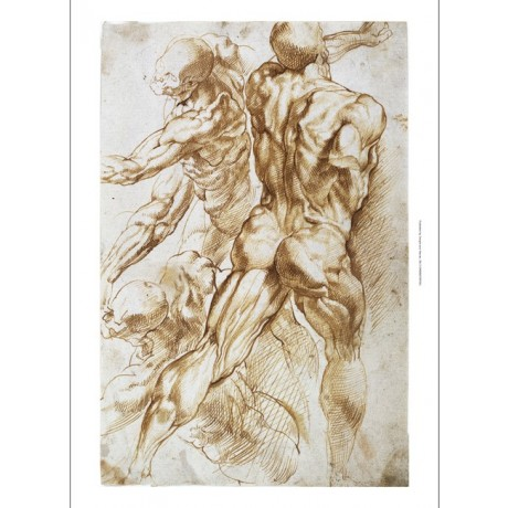 RUBENS Anatomical: Nudes In Combat MUSCULATURE bottom skull CANVAS PRINT giclee