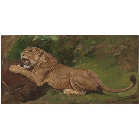 "GEZA VASTAGH ""A Lioness Ready to Pounce"" FEROCIOUS teeth prey hunt NEW CANVAS"