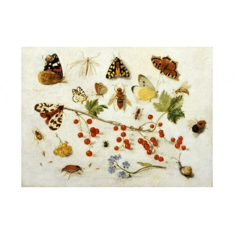 JAN VAN KESSEL II Insects PRINT ON CANVAS, STUNNING! various SIZES available